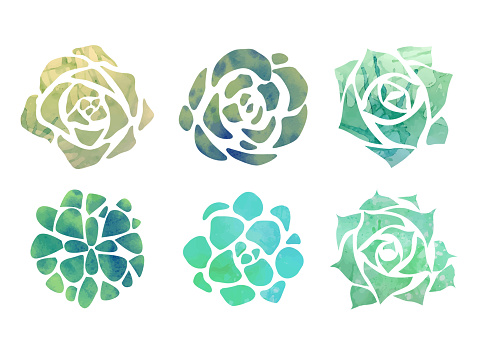 Set of watercolor succulents with a top view on a white background.
