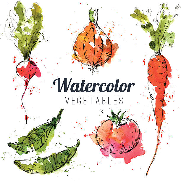 Set of watercolor vegetables Set of watercolor vegetables radish stock illustrations