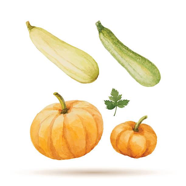 Set of watercolor vegetables. Set of watercolor vegetables, pumpkin, zucchini, parsley. Vector illustration. squash vegetable stock illustrations