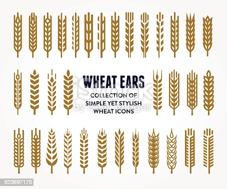 Set of simple and stylish Wheat Ears icons and design elements for beer, organic local farm fresh food, bakery themed design