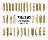 Set of Wheat Ears icons