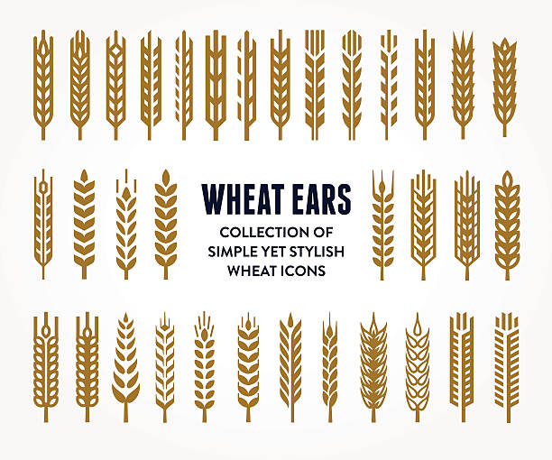 Set of Wheat Ears icons Set of simple and stylish Wheat Ears icons and design elements for beer, organic local farm fresh food, bakery themed design plant stem stock illustrations