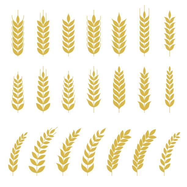 buğday veya arpa simge kümesi - buğday stock illustrations