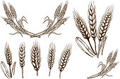 Set of wheat spikelet illustrations on white background. Design element for poster, card, banner, flyer. Vector image