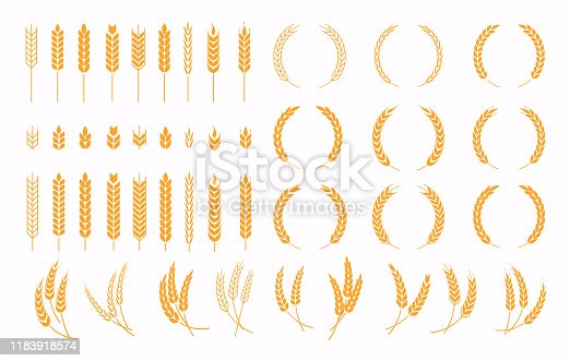 Set of wheats ears icons and wheat design elements. Harvest wheat grain, growth rice stalk and whole bread grains or field cereal nutritious.