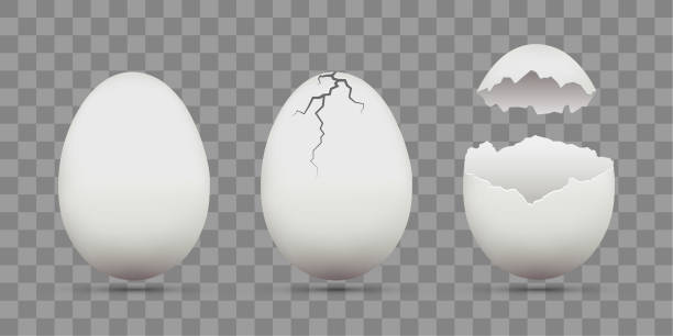 set of white chicken eggs. shell with cracks. isolated on a transparent background. - egg stock illustrations