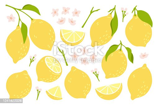 Set of whole, cut in half, sliced on pieces fresh lemons . Citrus fruit collection with lemon peel, flowers and leaves in hand drawn style. Vector illustration isolated on white background.