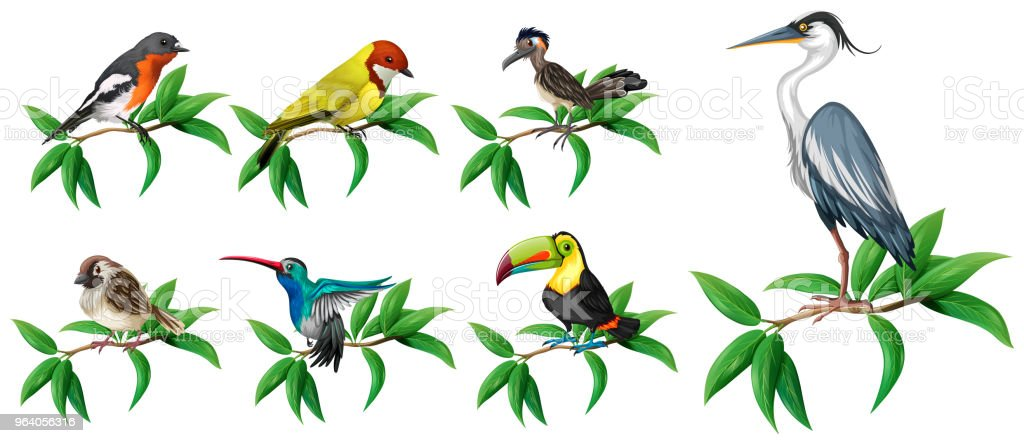 A Set of Wild Bird on White Background - Royalty-free Abstract stock vector