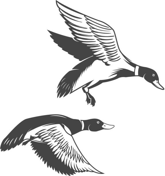 Set of wild ducks icons isolated on white background. Design elements for label, emblem Set of wild ducks icons isolated on white background. Design elements for  label, emblem, sign duck bird stock illustrations