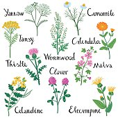 Set of Wild Herbs: Celandine, Yarrow, Clover, Elecampane, Milk Thistle,  Tansy, Malva, Wormwood, Calendula, Chamomile.