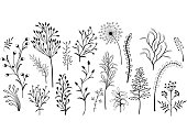 Set of wild plants. Black and white illustration.