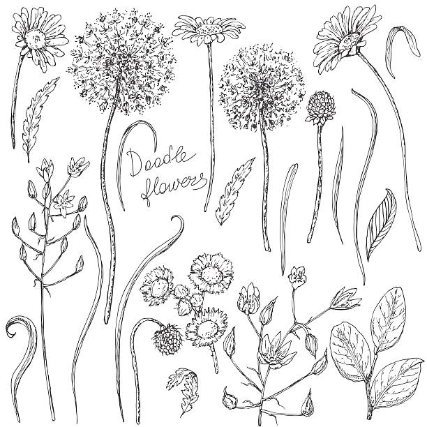 Top 60 Wildflower Clip Art, Vector Graphics and