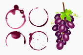 Set of wine stains, circles isolated on white background. Wine texture with shape of circles, vector eps 10 illustration