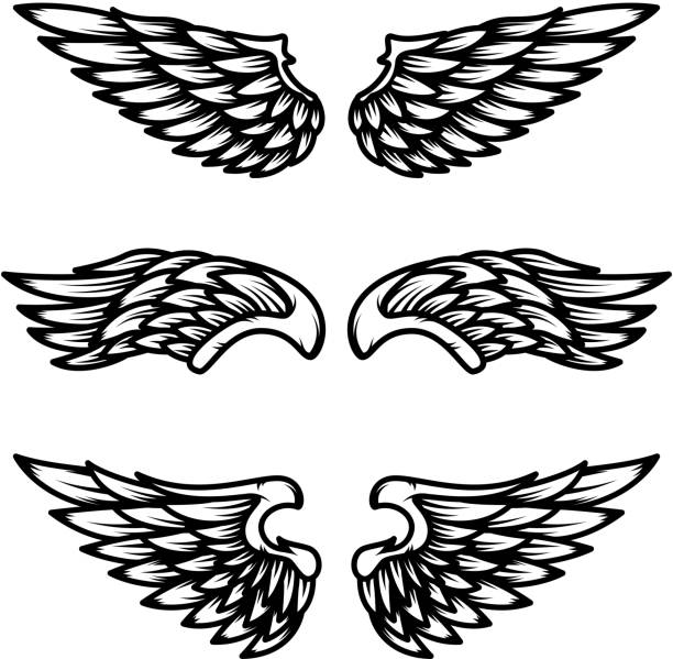 Set of wings isolated on white background. Design element for label, emblem, sign. Set of wings isolated on white background. Design element for  label, emblem, sign. Vector illustration aircraft wing stock illustrations
