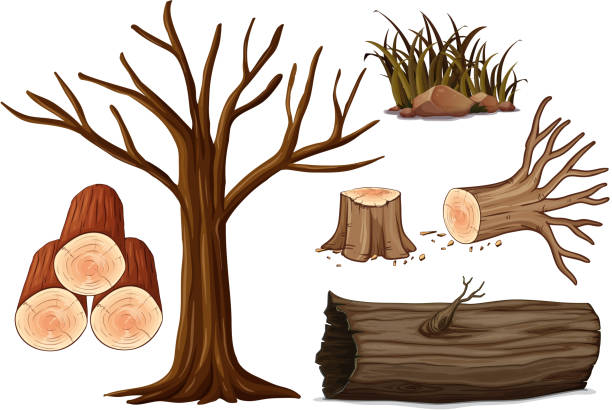 a set of wood - wood texture stock illustrations