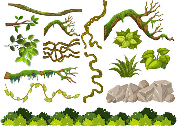 Set of wooden branches and rocks on white background Set of wooden branches and rocks on white background illustration moss stock illustrations