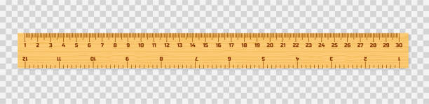 Set of wooden rulers 15, 20 and 30 centimeters with shadows isolated on white. Measuring tool. School supplies. Vector illustration. Set of wooden rulers 15, 20 and 30 centimeters with shadows isolated on white. Measuring tool. School supplies. Vector stock illustration. ruler stock illustrations