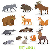 Set of woodland and forest animals. Europe and North America fauna collection. Wolf, boar, moose, bear, lynx, fox, raccoon, wolverine, deer, hedgehog, hare, squirrel and badger.