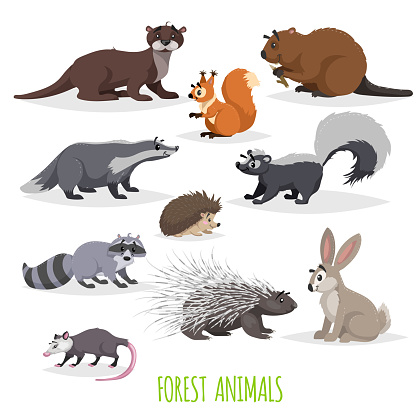 Set of woodland and forest little animals. Europe and North America fauna collection. Raccoon, hedgehog, hare, squirrel ,  badger skunk, opossum, beaver, otter and porcupine.