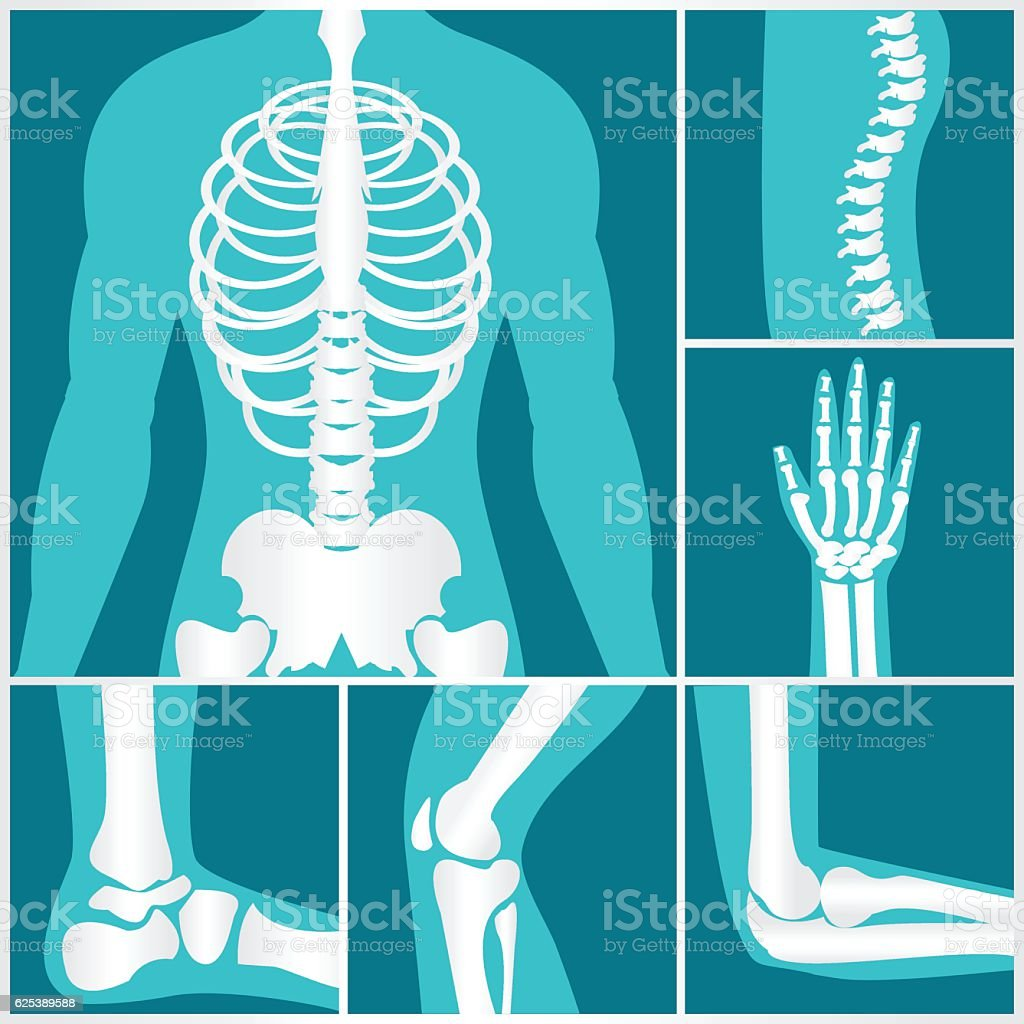 Set of xray of human skeletal. vector art illustration