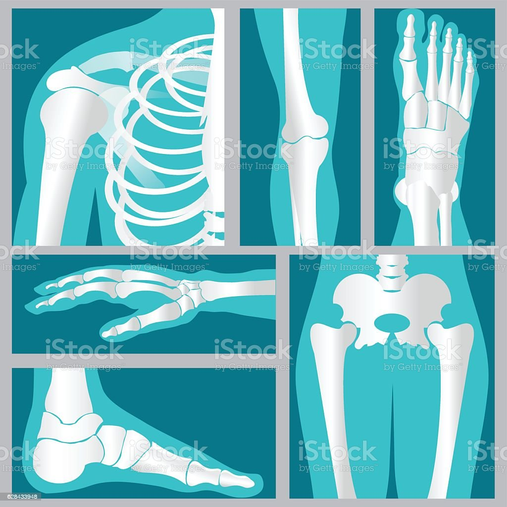 Set of xray of human. vector art illustration