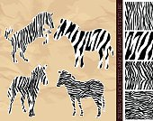 Set of zebra silhouettes with seamless texture