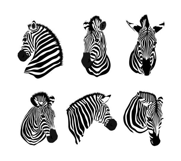 satz von zebras kopf. savanne tier ornament. - zebras stock-grafiken, -clipart, -cartoons und -symbole