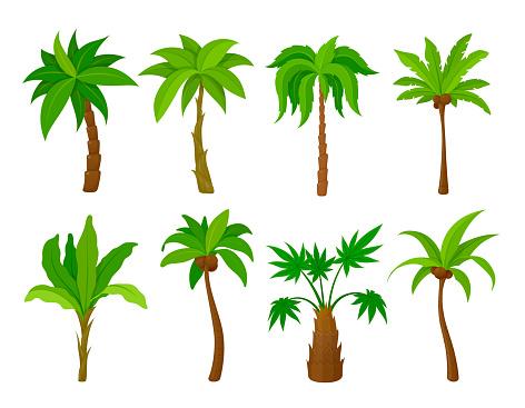 Set palm tree vector flat illustration cartoon tropical plants natural coconut wood