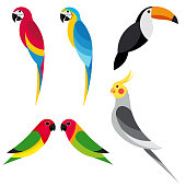 set flat parrot on white background