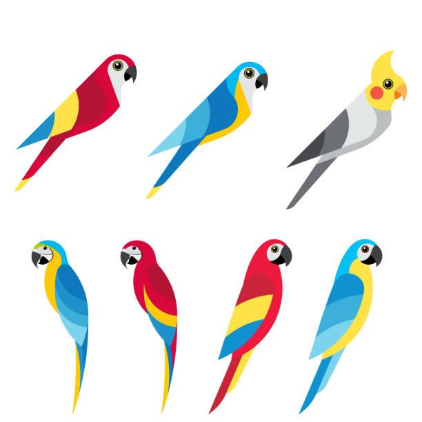 ilustrações de stock, clip art, desenhos animados e ícones de set parrot 6 - arara