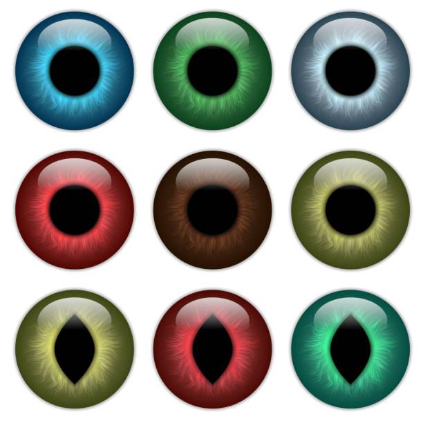 set pupil, contact lenses - dragon eye stock illustrations, clip art, cartoons, & icons