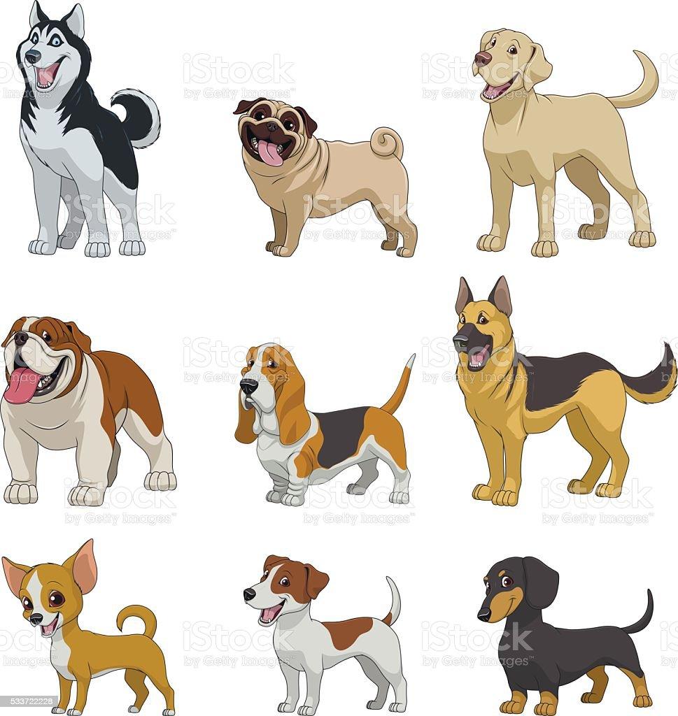 Set purebred dogs vector art illustration