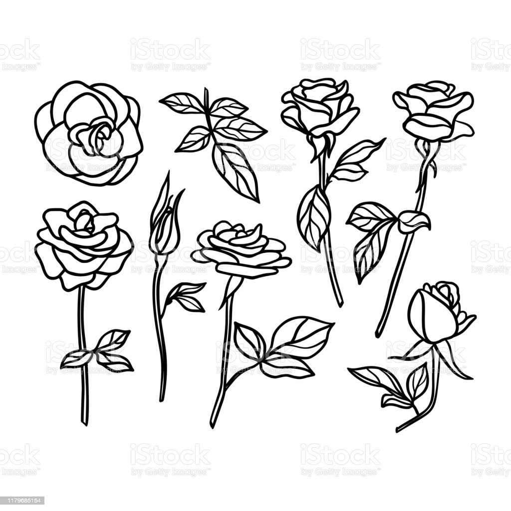 Set Rose Flower Line Drawing Vector Floral Collection In A Trendy Minimalist Style Stock Illustration Download Image Now Istock
