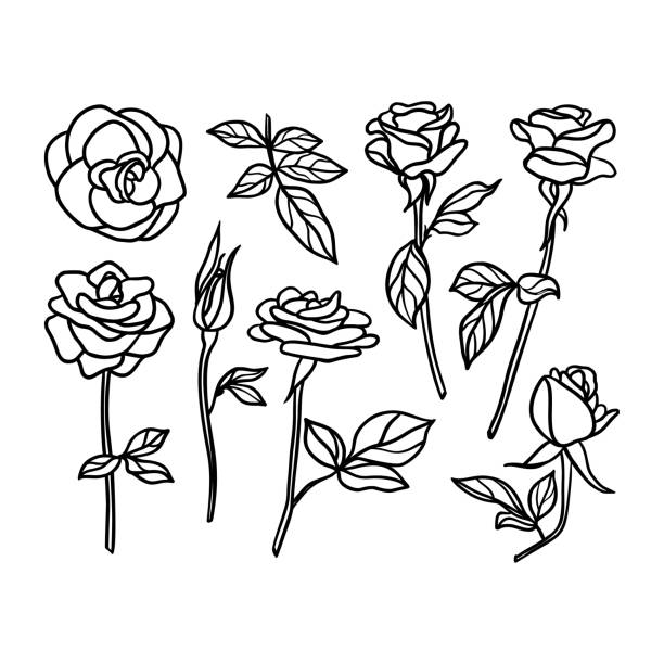 Set Rose Flower line drawing. Vector Floral collection in a Trendy Minimalist Style Set Rose Flower line drawing. Vector Floral collection in a Trendy Minimalist Style. For the design of Logos, Invitations, posters, Postcards, prints on t-Shirts. flowers tattoos stock illustrations