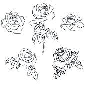 Set Rose sketch.