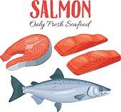 Set salmon vector illustration