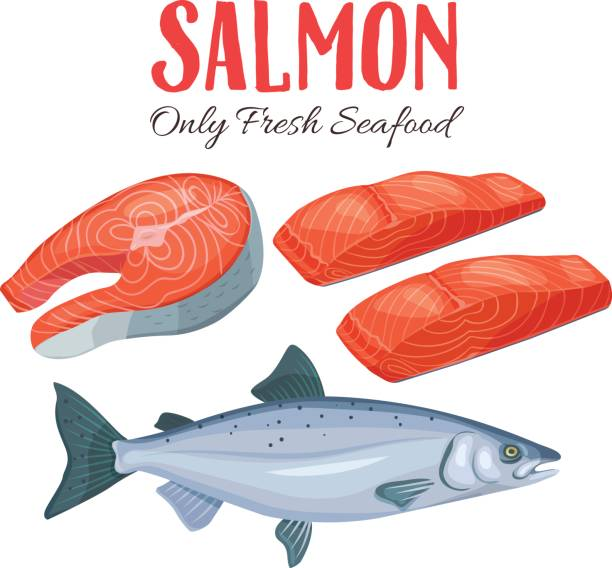 ilustraciones, imágenes clip art, dibujos animados e iconos de stock de ilustración de vector set de salmón - atún pescado