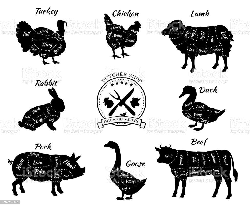 Set Schematic observer des animaux pour Butcher Shop - Illustration vectorielle