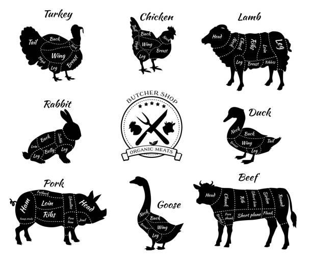 bildbanksillustrationer, clip art samt tecknat material och ikoner med set schematic vew of animals for butcher shop - loin