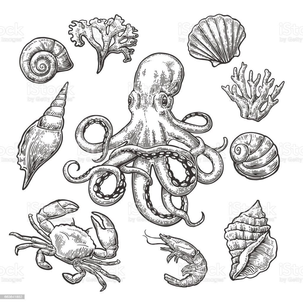 Set sea shell, coral, crab, shrimp and octopus. vector art illustration