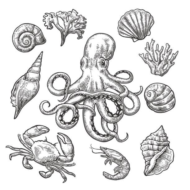 set sea shell, coral, crab, shrimp and octopus. - marine life stock illustrations