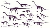Set, silhouettes, dino skeletons, dinosaurs, fossils.