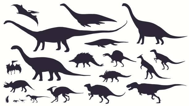 bildbanksillustrationer, clip art samt tecknat material och ikoner med ange, silhuetter, dino skelett, dinosaurier, fossiler. - ancient white background