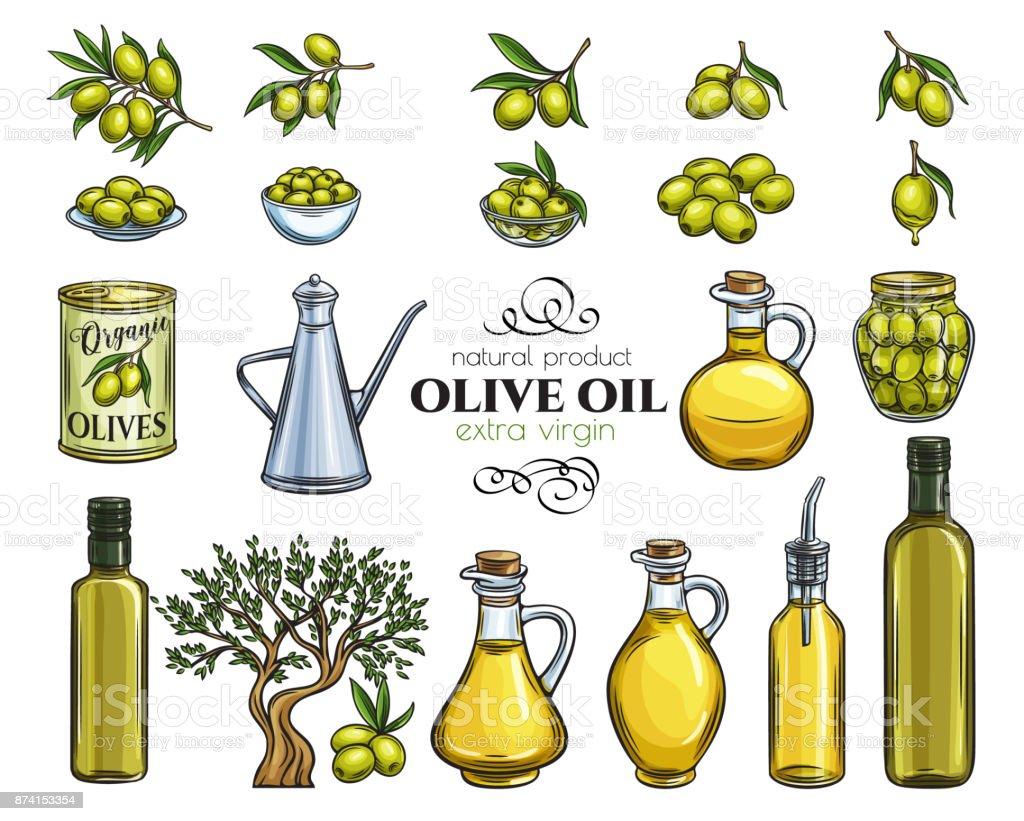 set sketch olive oil - ilustração de arte vetorial