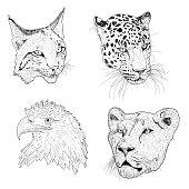 Set sketch silhouette sketch eagle, lynx, leopard. lioness face on white background illustration.