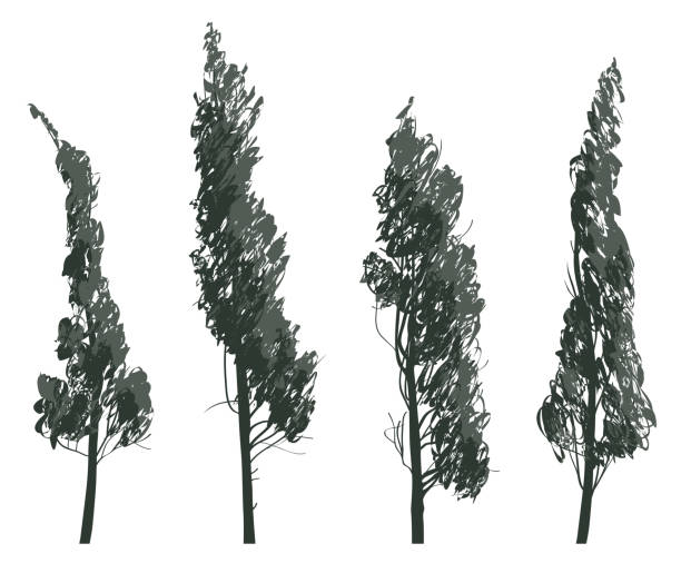 Set sketches of trees isolated on white background - illustrazione arte vettoriale