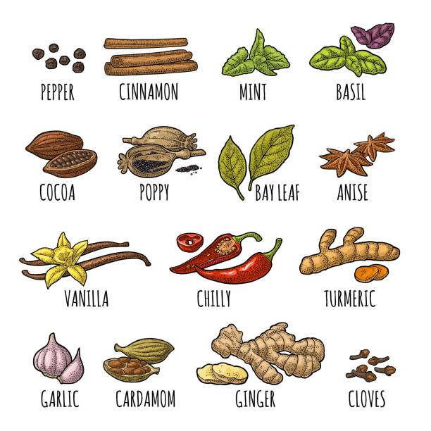 set spices. vintage vector engraved illustration. - plant pod stock illustrations