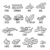 Set spices. Black pepper, cinnamon, turmeric, mint, cloves, cocoa, poppy, chilli, vanilla, bay leaf, anise, garlic, cardamom, ginger. Vector black vintage engraving illustration isolated on white