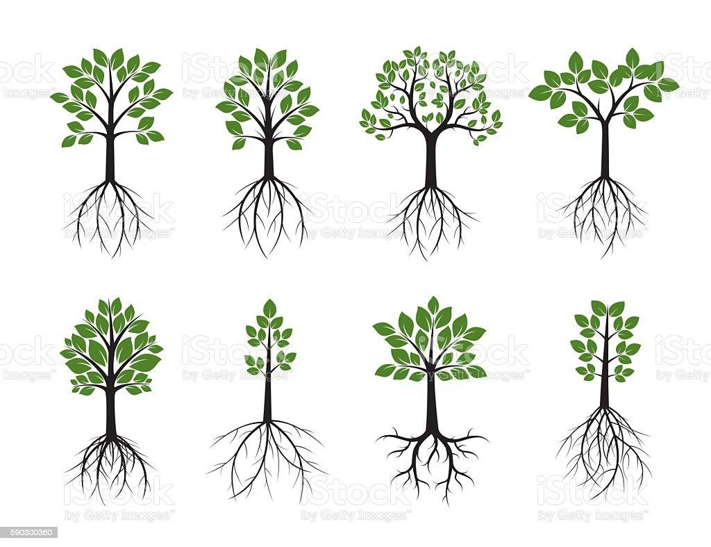 Set Trees and Roots. Vector Illustration. royaltyfri set trees and roots vector illustration-vektorgrafik och fler bilder på bildbakgrund