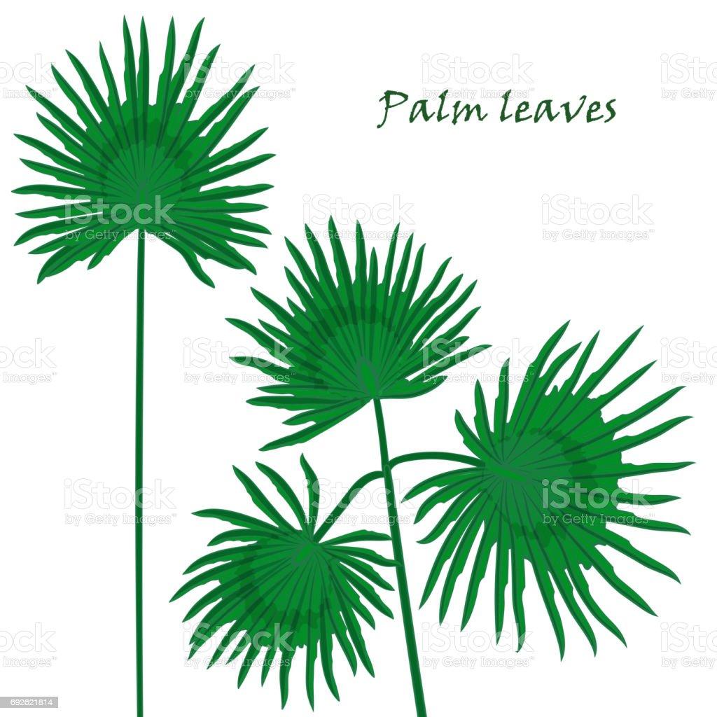 Feuilles De Palmiers Tropicaux Set Dessin Realiste Dans Un Style